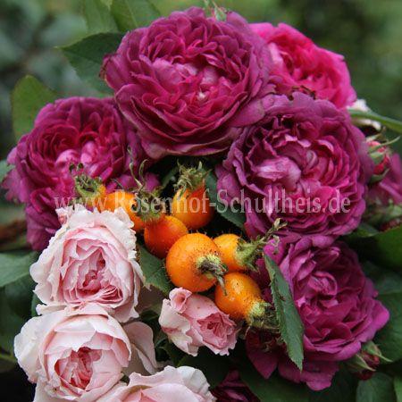 reine des violettes ii rosen online kaufen im rosenhof schultheis rosen online kaufen im. Black Bedroom Furniture Sets. Home Design Ideas