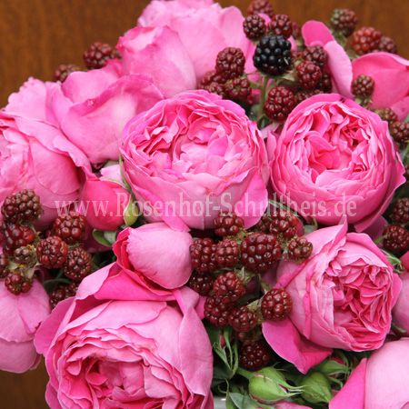 old spice rosen online kaufen im rosenhof schultheis rosen online kaufen im rosenhof schultheis. Black Bedroom Furniture Sets. Home Design Ideas