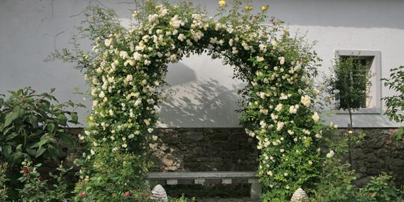 perfekter rosenbogen rosen ratgeber informatives rosen online kaufen im rosenhof schultheis. Black Bedroom Furniture Sets. Home Design Ideas