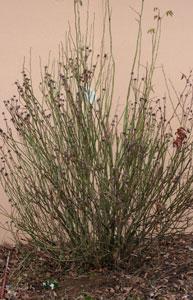 rosen schneiden im fruehjahr rosen schneiden rosen. Black Bedroom Furniture Sets. Home Design Ideas