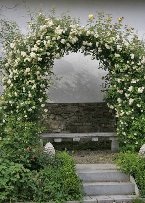kletterrosen rosen rosen online kaufen im rosenhof schultheis. Black Bedroom Furniture Sets. Home Design Ideas