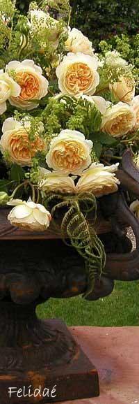 moderne romantikrosen moderne rosen rosen rosen. Black Bedroom Furniture Sets. Home Design Ideas